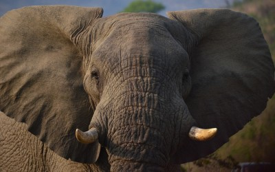 Spotting 'Scalability' – And How to Avoid The Elephant Trap of A Lifestyle Business